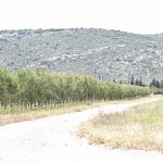 Voyage blogueurs Papillon – 1ère Partie – A la découverte de L'huile d'olive Papillon