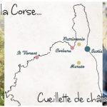 Visite de Corbara & Cueillette de châtaignes à Murato