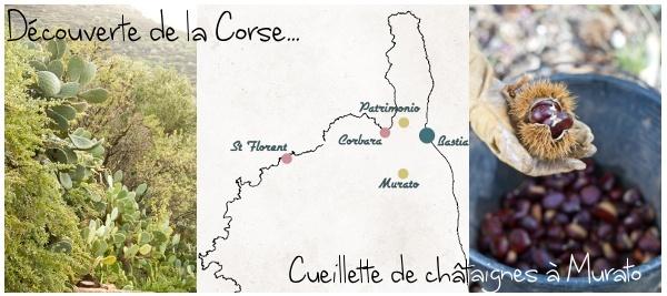 Corsic-addict – Episode 3 : Visite de Corbara & Cueillette de châtaignes à Murato