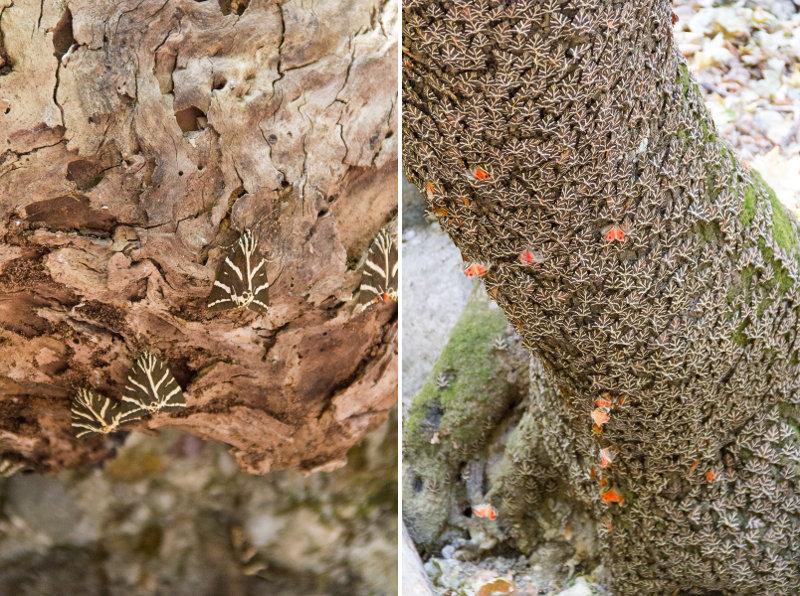 Vallée des Papillons - Rhodes - Petaloudes