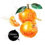 Clementine Mandarine