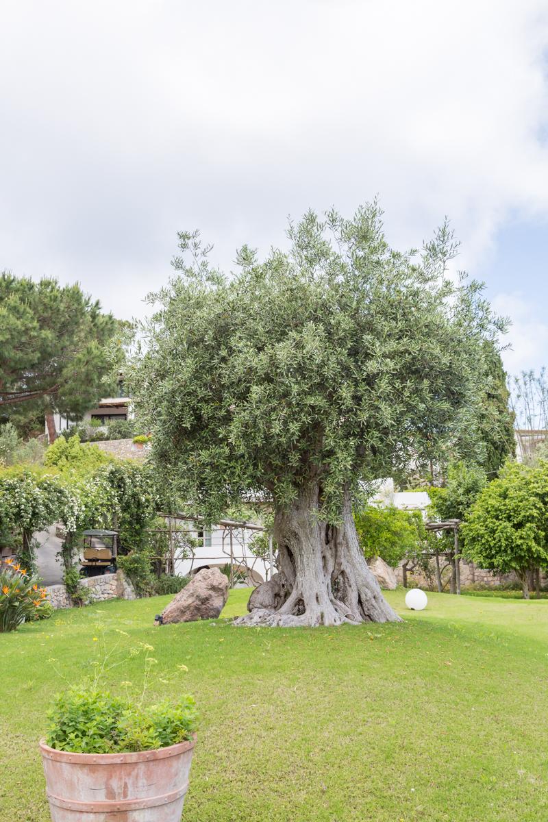 Ischia Garden Villa - Sandra Pascual-0938